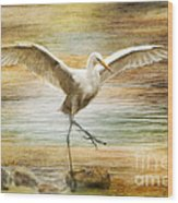 Snowy Egret Dancing  Wood Print