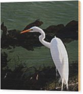 Great Egret Monterey Bay California  By Pat Hathaway Wood Print