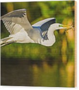 Snowy Egret Flying With A Branch Wood Print by Andres Leon