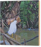 Snowy Egret In Costa Rica Wood Print