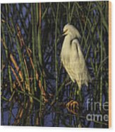 Snowy Egret In The Reeds Wood Print
