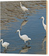 Snowy Egret Lunch Break Wood Print