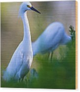 Snowy Egret On A Lush Green Foreground Wood Print by Andres Leon