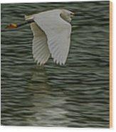 Snowy Egret On Estuary Wood Print