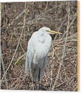 Snowy Egret On The Marsh Wood Print