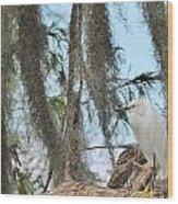 Snowy Egret Wood Print