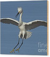 Snowy Egret Photo Wood Print