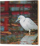 Snowy Egret Stalking His Lunch Wood Print