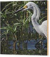 Snowy Egret Stalking Wood Print