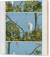 Snowy Egret Triptych Wood Print