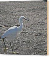 Snowy Egret Walk Wood Print