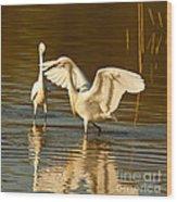 Snowy Egret Wingspan Wood Print