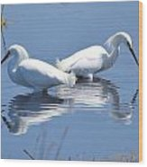 Snowy Egrets With Reflection Wood Print