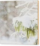 Snowy Evergreen Wood Print