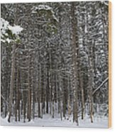 Snowy Forest In Acadia Wood Print
