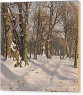 Snowy Forest Road 1908 Wood Print