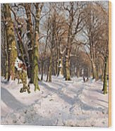 Snowy Forest Road In Sunlight Wood Print
