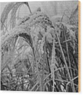 Snowy Grass Wood Print