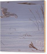Snowy In Sunset Flight Wood Print