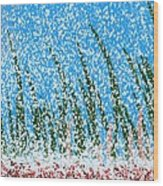 Snowy Lawn On A Sunny Day Wood Print
