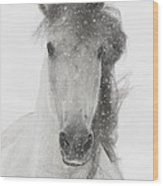 Snowy Mare Wood Print