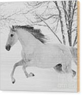 Snowy Mare Leaps Wood Print