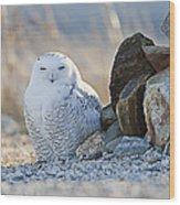 Snowy Owl Among The Rocks Wood Print