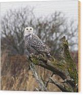 Snowy Owl At Boundary Bay  Wood Print
