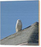 Snowy Owl Awaiting An Opportunity Wood Print