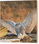 Snowy Owl - Bubo Scandiacus Wood Print by Michael Russell