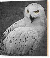 Snowy Owl Calling Wood Print