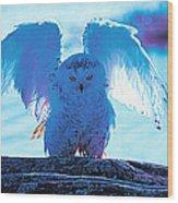 Snowy Owl Drying After Bath Wood Print