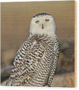 Snowy Owl Female Wood Print