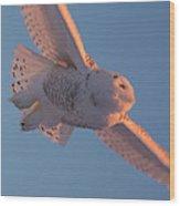 Snowy Owl Flight Wood Print