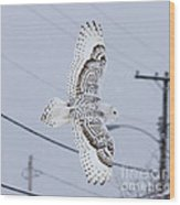 Snowy Owl Glides Into Town Wood Print