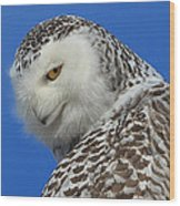 Snowy Owl Greeting Card Wood Print by Everet Regal