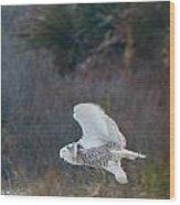 Snowy Owl In Florida 11 Wood Print