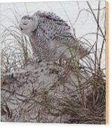 Snowy Owl In Florida 13 Wood Print