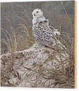 Snowy Owl In Florida 14 Wood Print