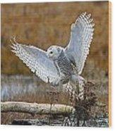 Snowy Owl Landing Wood Print