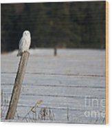 Snowy Owl Landscape Wood Print
