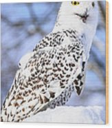 Snowy Owl Look Out Wood Print