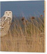 Snowy Owl Morning Wood Print