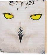 Artic Snowy Owl Painting Wood Print