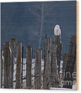 Snowy Owl On A Fence Wood Print