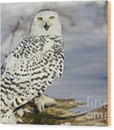 Snowy Owl On A Winter Hunt Wood Print