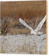 Snowy Owl On The Hunt Wood Print