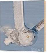 Snowy Owl Pictures 47 Wood Print