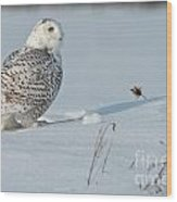 Snowy Owl Pictures 53 Wood Print