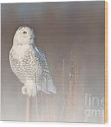Snowy Owl Pictures 67 Wood Print